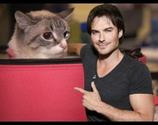 Why Ian Somerhalder Is Back To Vampires In V-Wars